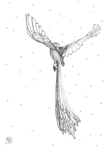 Marie Noelle bird